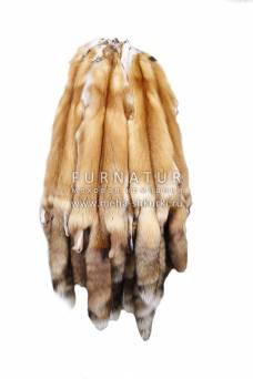 Лисица-огневка Канадская