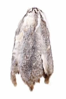 Барсук канадский