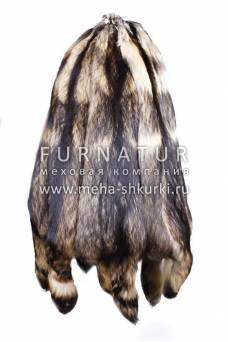Енотовидная собака финская натуральная