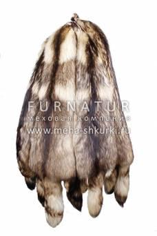 Енотовидная собака финская обесцвеченная