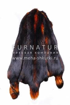"""Енотовидная собака финская """"Оранжевая бриза"""""""