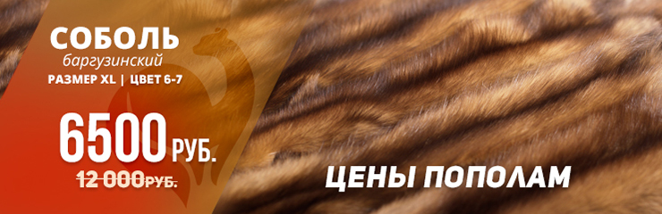 соболь баргузинский 1