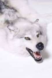 """Ковер """"Волк полярный"""""""